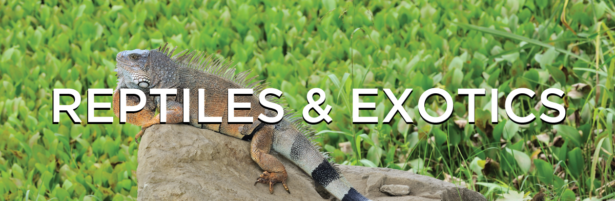 Whitie S Pets Reptiles Exotics